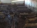 Limpieza y mantenimientos explotaciones ganaderas (12)